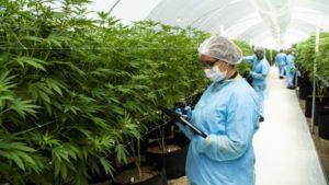 Cannabis Water Treatment