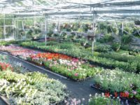 Nursery and Greenhouse Water Treatment